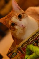 Monopoly Cat by BioVenomImagery