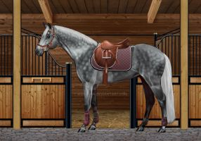 Tacked-up Gray by EquestriLand