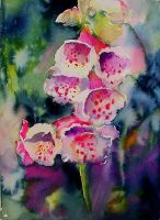 Digitalis by rsharts
