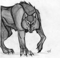 black wolf by Suenta-DeathGod