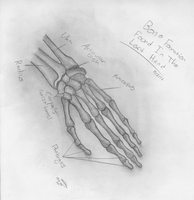 Bone Formation Of The Left Hand Sketch by Mysterious-Master-X