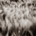 While Soft Wind Shakes The Barley by DpressedSoul