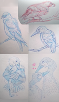 sketches by AlaxendrA