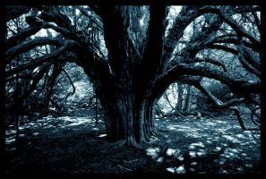 The Wicked Tree by atalaya