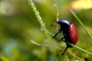Bug and drops by psilocybica