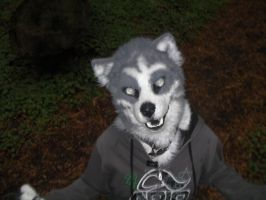 Humboldt Wolf-Dog YEAH by wolfforce58