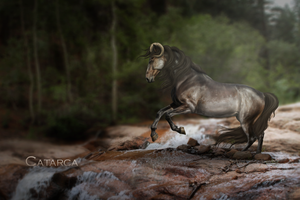 Catarca by ibbeltje-com
