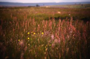 Wild flowers and grasses by younghappy