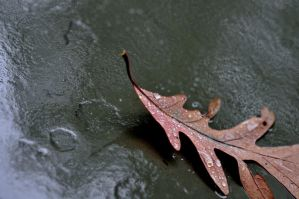 The Leaf by TWOphotography