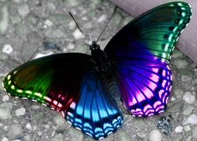 Butterfly Art - 1 by CNLGraphics