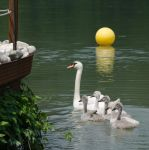 A bunch of ugly ducklings by XanaduPhotography