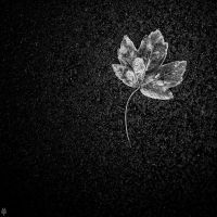 Lone Leaf by shadowfoxcreative