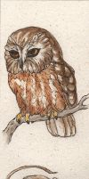 Northern Saw-whet Owl Birdmark by teriathanin