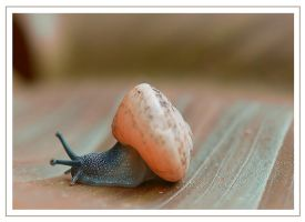 Little snail by Nataly1st