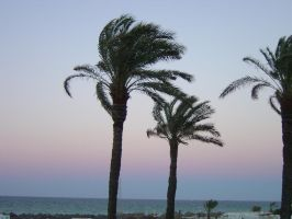 Palm tree by G-Unit23Stock