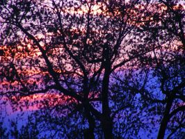 Colorful Sunset Between Trees by ticklemeimsexy