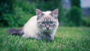 Ready To Attack by Bagirushka