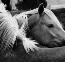 Horses Hug by Julie Luke by jewles654