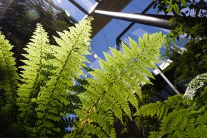 sky blue and fern green by justtam47