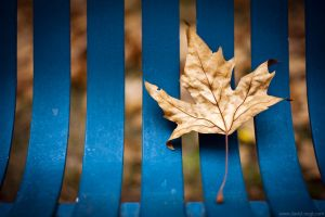 Leaf by DavidVogt