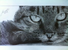 'Cat' - 2013 - (Drawing) by Stevegillettart