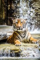 Tiger Falls 2 by 904PhotoPhactory