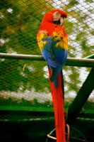 le macaw by troldemort