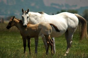 White Mare Protecting Baby by houstonryan