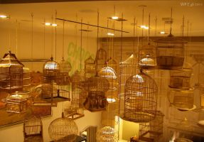 celing of bird cages by SurfTiki
