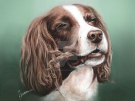Custom Pet Portrait Commission by Pandoras-Encore