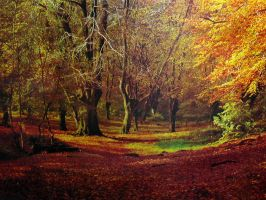 Forest by Flore-stock