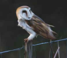 Faceowl by ruphia