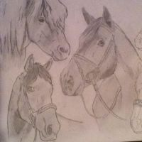 my horses by ArtisticAnubis