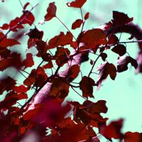 Autumn In Love by OrchidFeehan