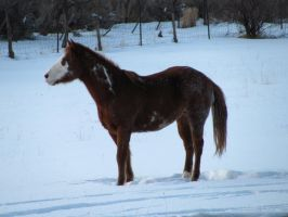 Horses 193 .:Stock:. by WesternStock