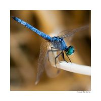 Mister Blue by butterfly36rs