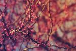 Spring by amphibia