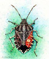 Stink Bug by Dusty-Feather