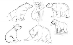 Bear Studies (July 2013) by Temiree
