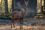 Deer by Fotostyle-Schindler
