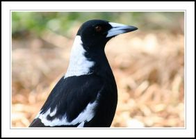The Magpie by Tiberius47