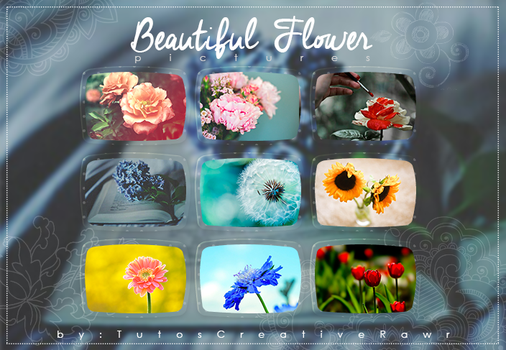 Beautiful Flowers* Pictures by iTutosCreativeRawr