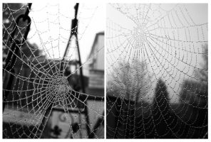 Spider's Web. by ToniTurtle