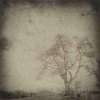 Fading... by bindii