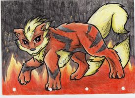Arcanine by RACHLOVEDRAW