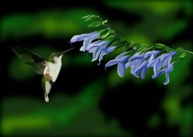 Colibri - digital painting by Giselle-M