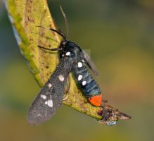 The Prettiest Bug EVER by JerryMorsePhotograph
