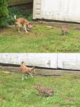 Bambi with a wild wabbit by youlittlemonkey