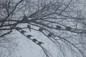 mourning doves by Laur720