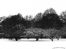 trees with snow mantel by rockmylife